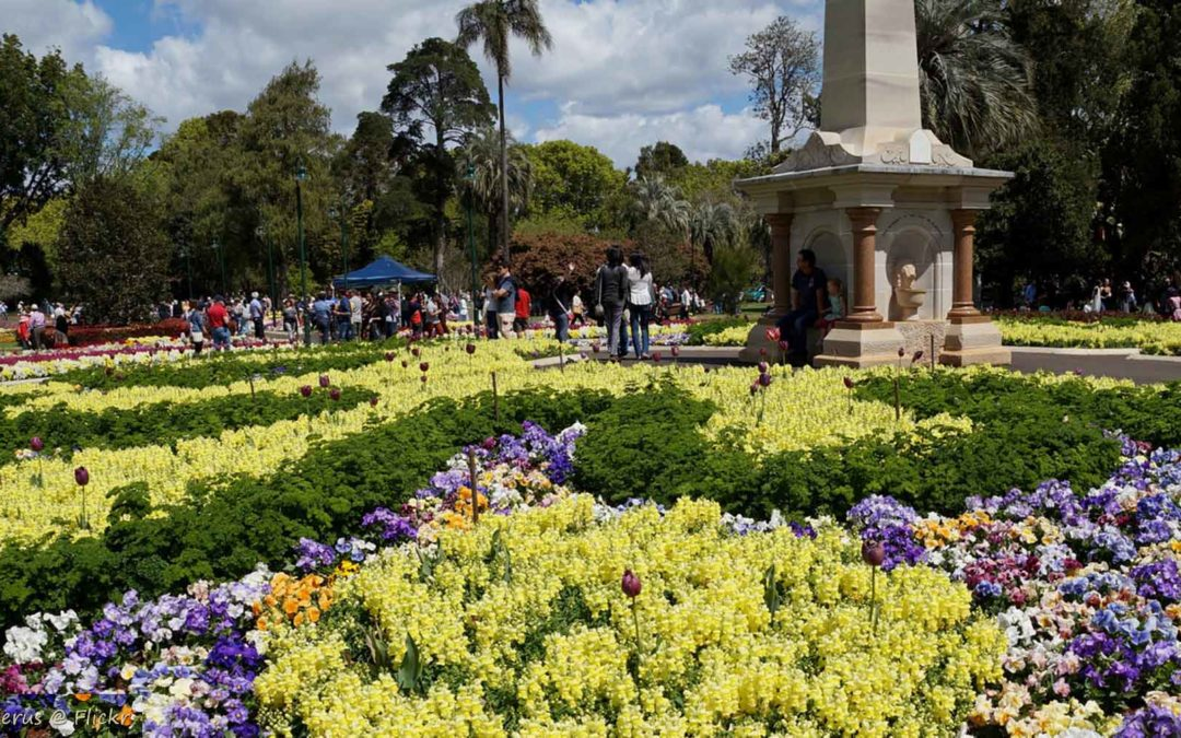 TOOWOOMBA CARNIVAL OF FLOWERS 2017